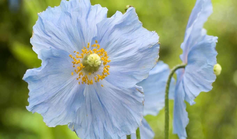 blue, цветы, небо, flowers,