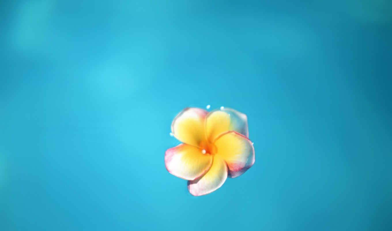 цветок, минимализм, синий, tropical, разрешении, flowers, download, изображение, mixes, bali, правой, картинке, island, кнопкой, minimalismus, free, house, deep,