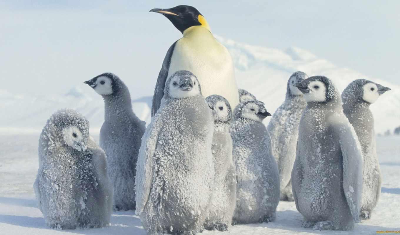 пингвин, антарктида, снег, full,