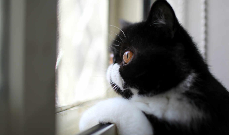кошки, кот, коты, many, аву,