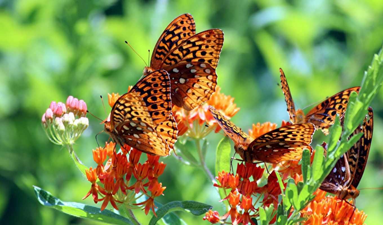 бабочки, цветы, макро, трава, красивые,