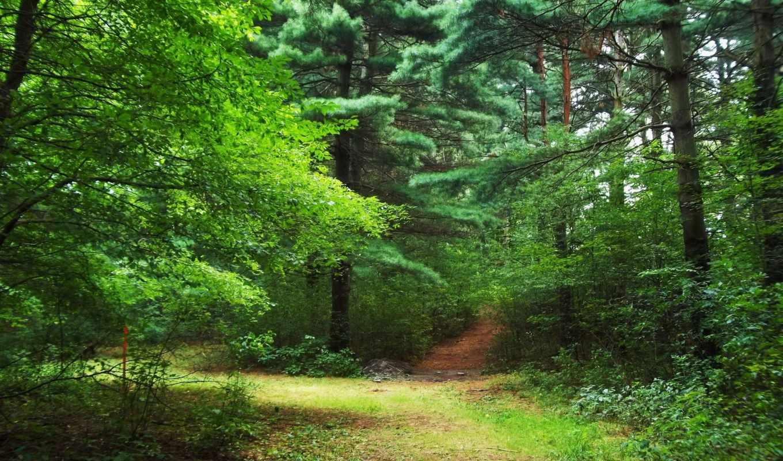 природа, лес, фоны, красивые, страница,