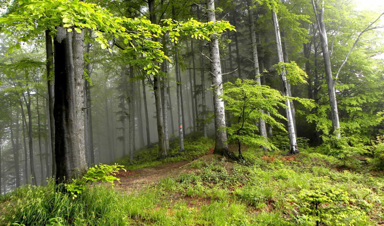 summer, природа, trees, landscape, лес,
