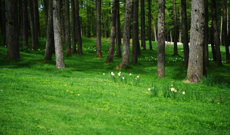 лес, поляна, цветы, фон, дерево, полянка, красивый, природа, одуванчик, ствол