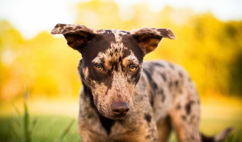 пес, собака, природа, смотрит,