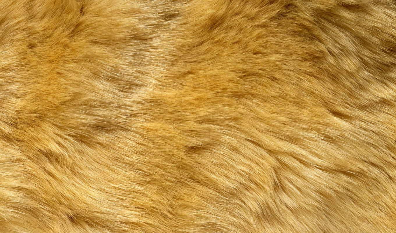 мех, текстура, заставки, daily, только, animal, красивые,