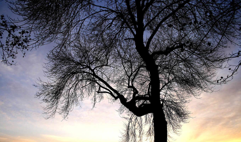 ауди, природа, категория, дерево, trees, tron, ветви,
