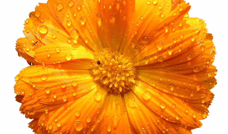 png, flowers, цветы, yellow, картинка, мб, очень, янв,