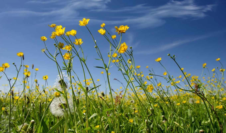 цветы, фон, flowers, солнечный,