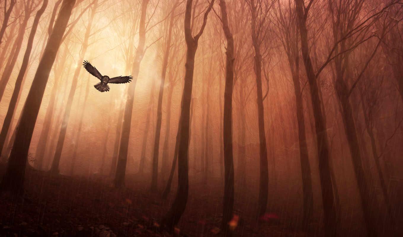сова, лес, trees, dark, лесу, дождь,