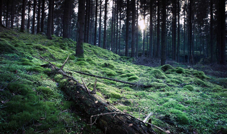 лес, trees, мох, landscapes, природа,