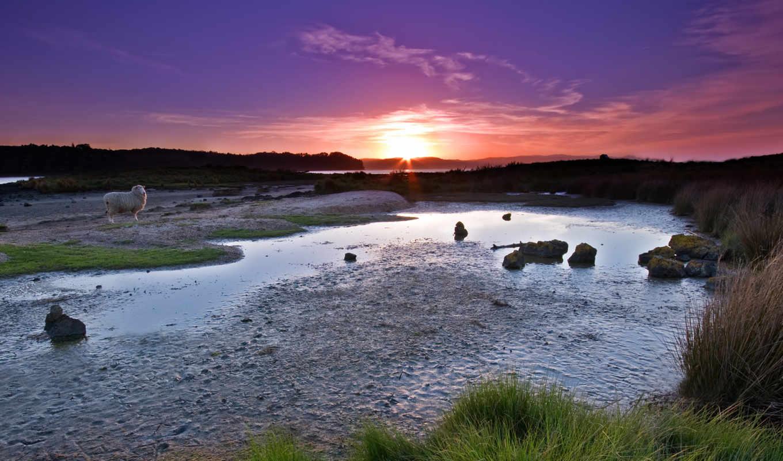 закат, sheep, сиреневый, sunset, широкоформатные,