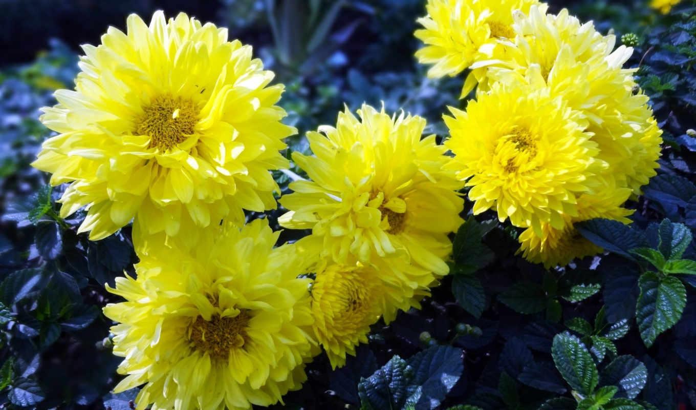hoa, hương, nước, dep, hóa, những, phẩm, заказать, giấy,
