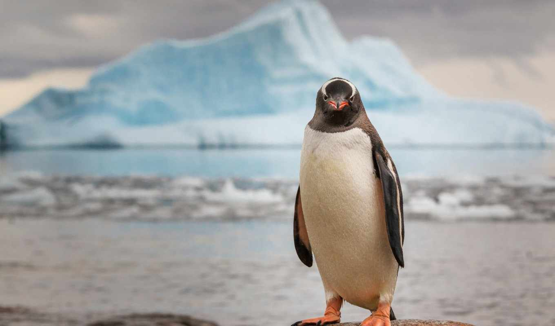 пингвин, ipad, glacier,