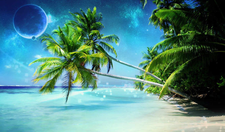 tropical, free, пляж, desktop, можно, you,
