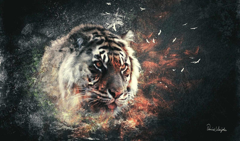 тигр, тигры, кошки,