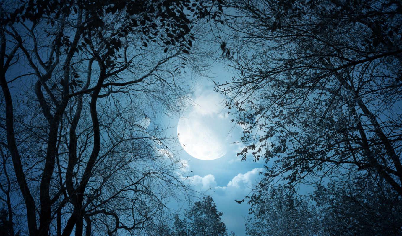 луна, night, nature, trees, деревья, лунный, свет, moonlight, clouds, облака, landscape, autumn,