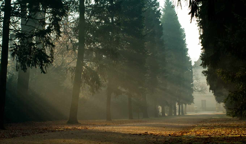 природа, деревья, пейзаж,