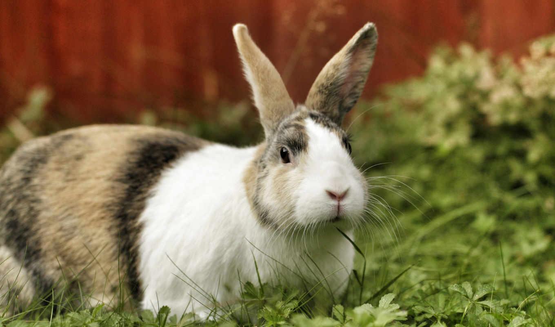easter, rabbit, животные, you, funny, background, pics, дек, заяц,