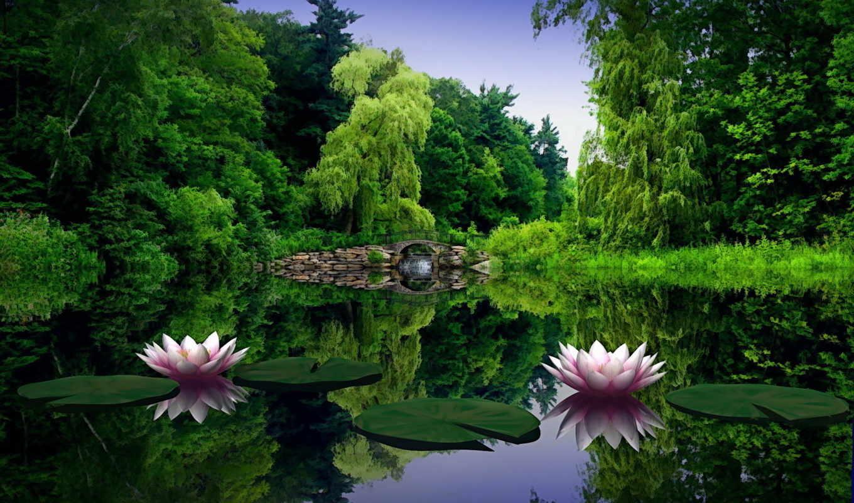 пруд, water, мост, ivy, кувшинки,