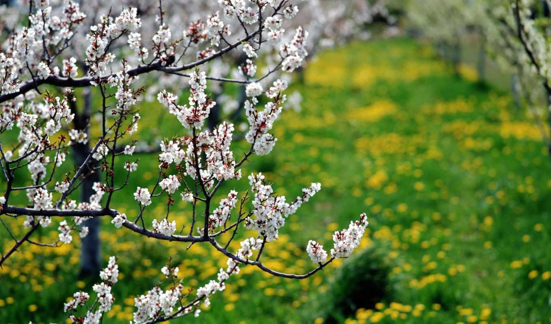 med, цветочный, полезные, свойства, июня, рецепты,