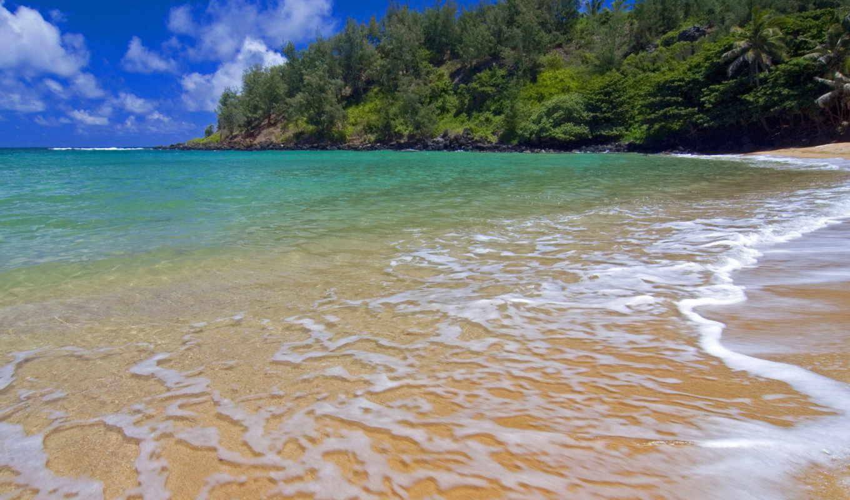 обои, море, берег, океан, небо, пляж, облака, паль
