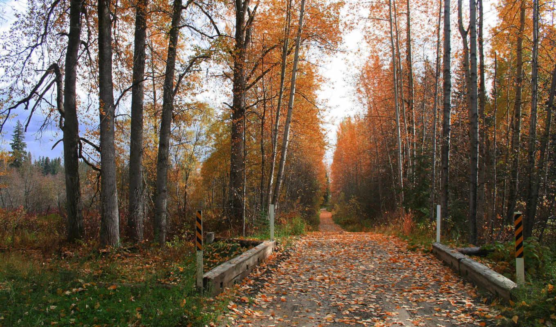 осень, нов, кб, природа, season,