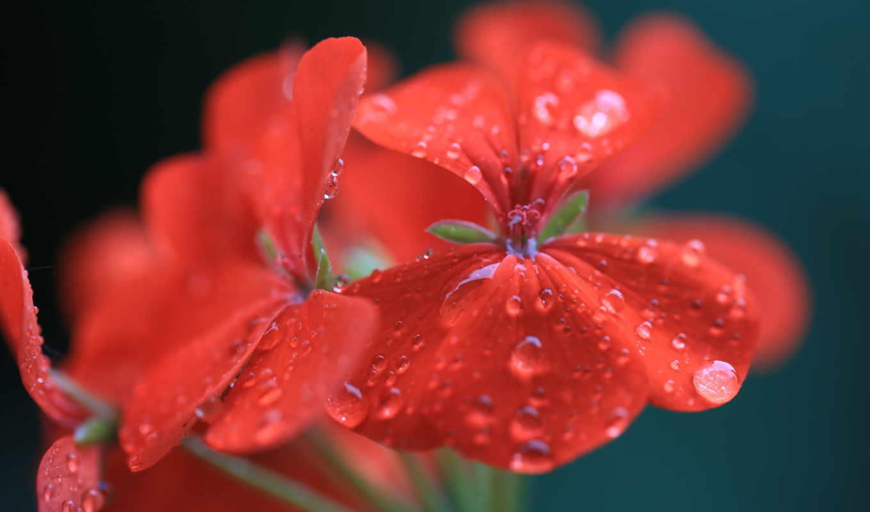 капли, макро, цветы, galaxy, xperia, water, samsung, sony,