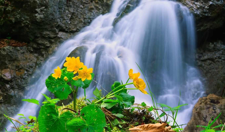 gardens, цветы, waterfalls, exterior, водопад, ponds,