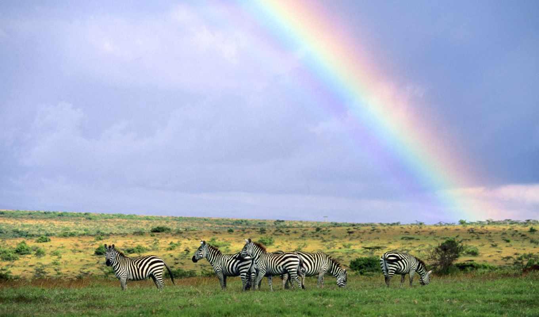 радуга, зебры, небо, взгляд,