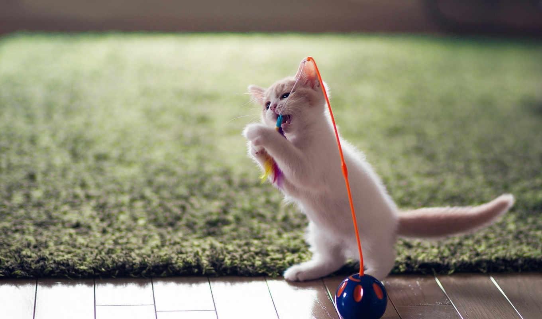 котенок, играет, red, кот, игрушкой,