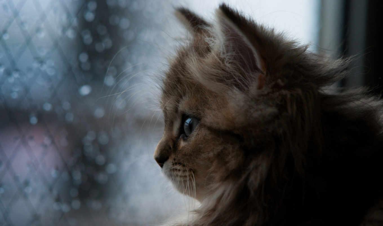 котенок, кот, дождь, пушистый, которые, ukraine, everything, images,