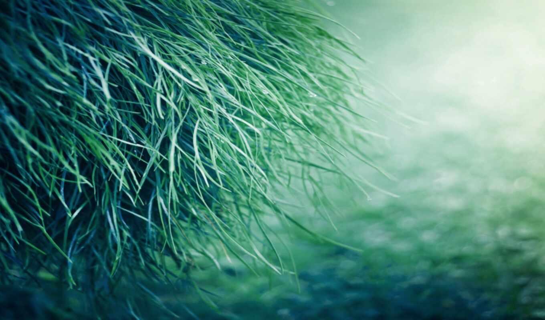 grass, pure, download, desktop, background, resolution, widescreen, green, world, picture, natural,