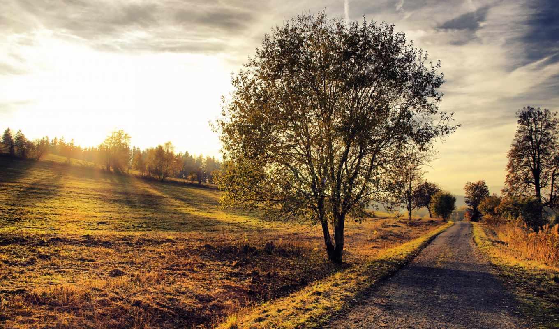 landscape, дерево, дорога, закат, природа,