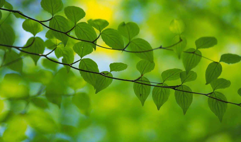 весна, зелень, листья,