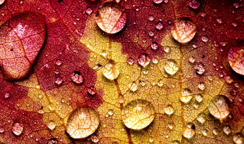 water, drops, осень, leaf, drop, макро, листья,