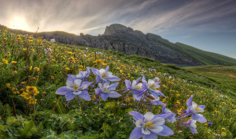 fleurs, kwiaty, sauvages, montagne, champs, definition, природа, des, чемпион, цветы,