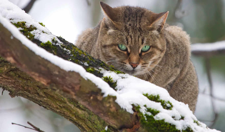 кот, но, снять, кота, киеве, зимы, подробнее, томск, подбробнее,