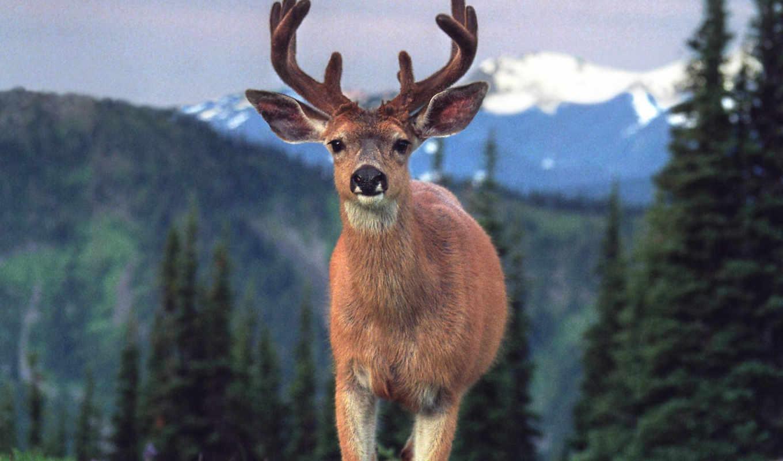 , animals, blacktail, calendar, turbobit,