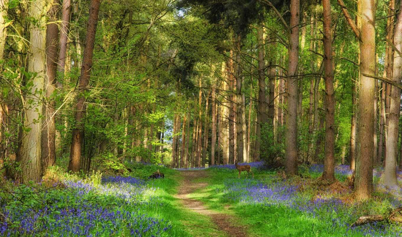пейзаж, лес, природа, тропинка, деревья, олень,