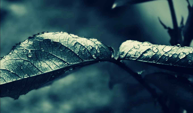leaf, капли, листья,