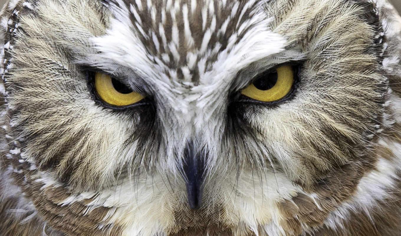 пила, whet, сова, cute, owls, muzza, gourmet, etsy,
