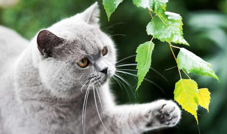 красивые фото и рисунки кошек слой-маску, увидите соответствующее