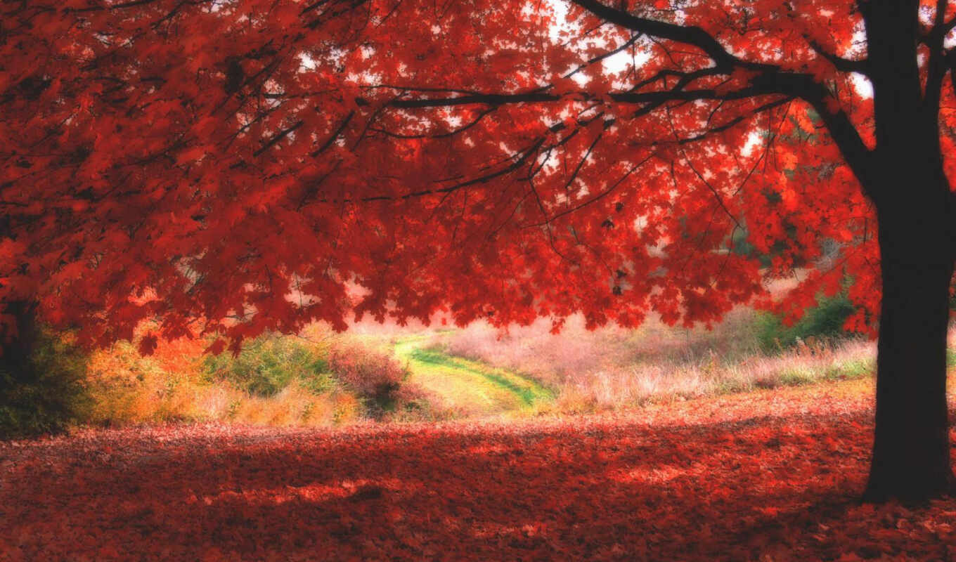 rosse, ombre, autumn, apple, desktop,