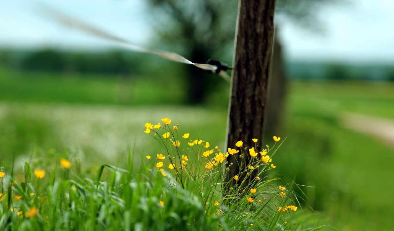 макро, забор, трава,