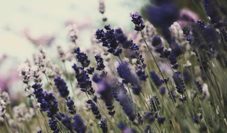 цветы, цветение, природа, растительность,