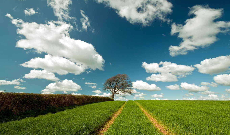 summer, landscape, поле, дорога, природа,