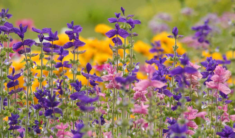 полевые, цветы, нашего, девочек, июня, сайта, кб,