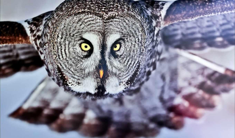 ,сова,птица,голова,крылья,