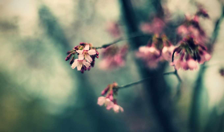 spring, pink, flowers, bokeh,